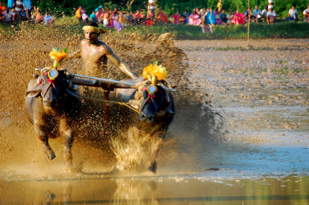 Kambala Confrontation