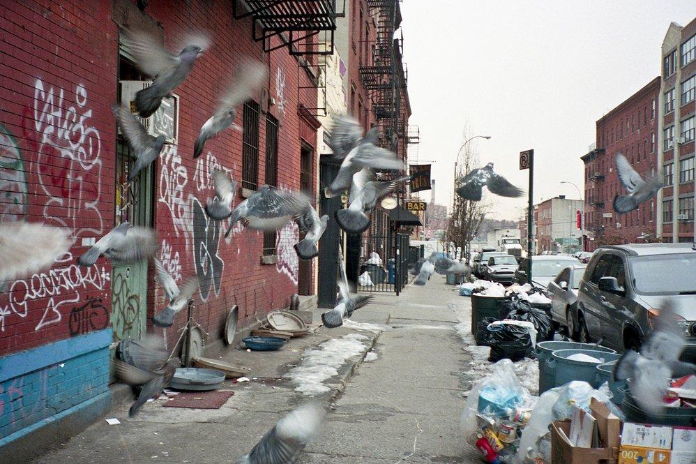 Chasing Birds in Brooklyn